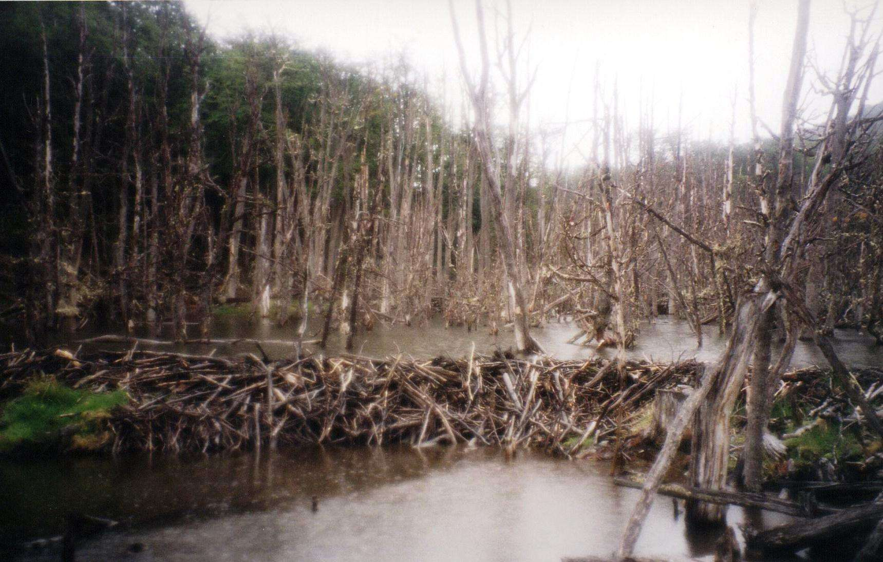 beaver dam 2 travel satire  photo image