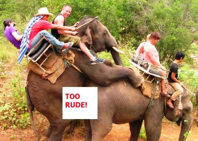 elephant ride thailand  photo