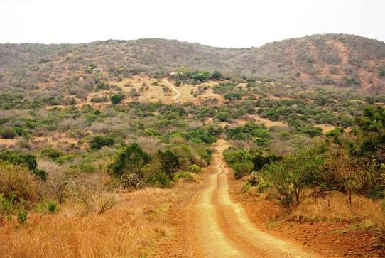 African Landscape Phinda Private Game Reserve south africa  photo