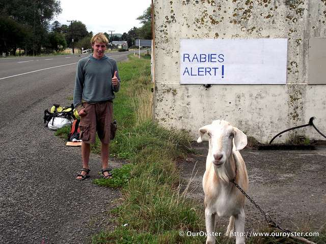Rabies Shot and Alert new zealand  photo image
