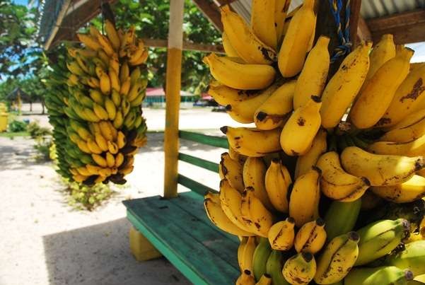 Bus Stand Food Of The World The Free Banana Bunch samoa  photo image