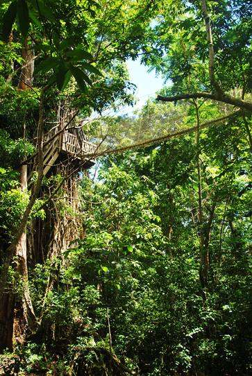 Rainforest Canopy samoa  photo image