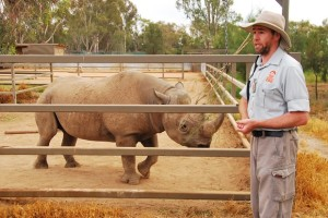 Black Rhino Breeding Program - Western Plains Zoo