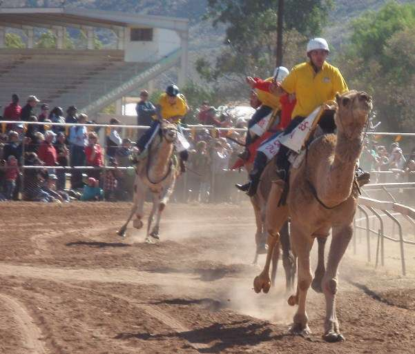 Camel Cup Alice Springs Northern Territory Australia