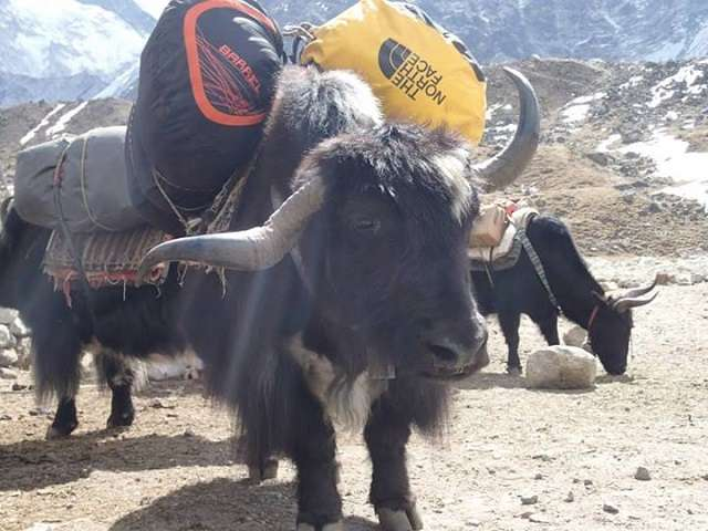 The Yak Route