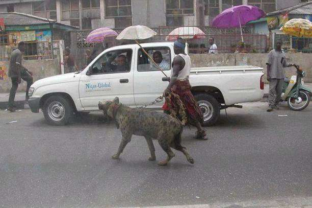 How To Walk a 'Dog' - in Nigeria!   The Travel Tart Blog