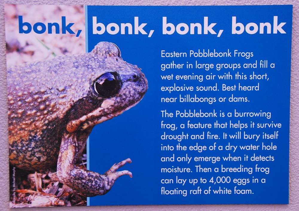 Funny Animal Names - Bonk Frog