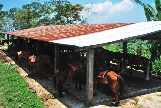 Hire a Horse at Gedung Songo Temples Semarang Indonesia